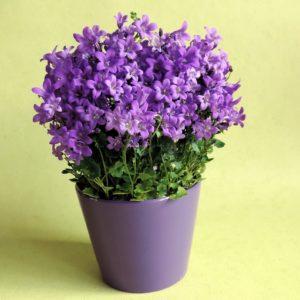 flowers-1291324_1920